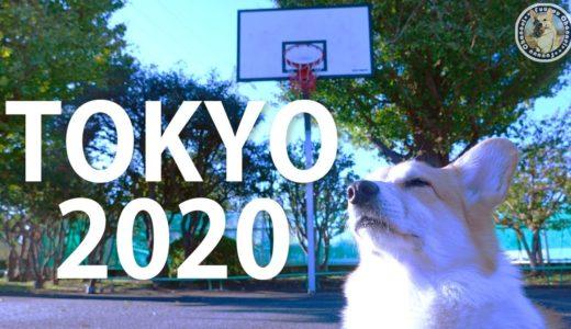 コーギー初出場!?目指せ東京オリンピック2020★corgi first appearance TOKYO 2020【Futa The Corgi】