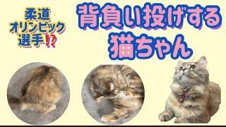 猫動画 オリンピック選手?柔道背負い投げする猫ちゃんの巻
